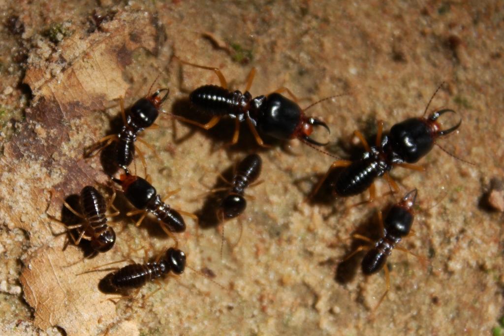Resultado de imagen para termitas