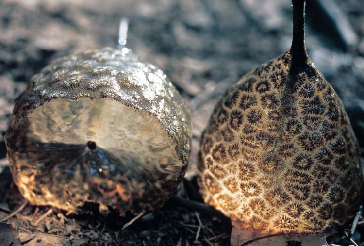 Resultado de imagen para Bryozoans