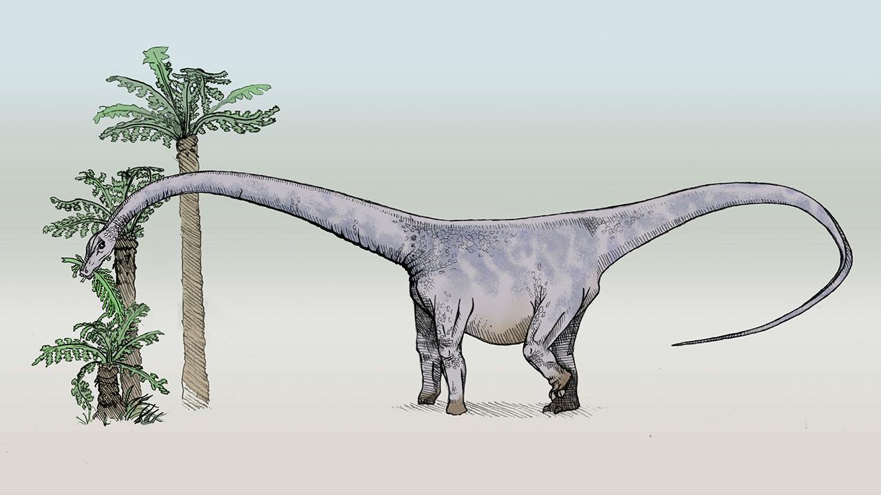 dinosaurios_mas_grandes_barosaurus