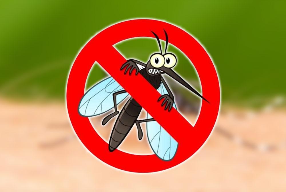 10 trucos para acabar con los mosquitos