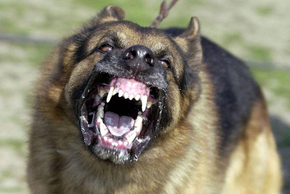 Los 10 perros más peligrosos del mundo